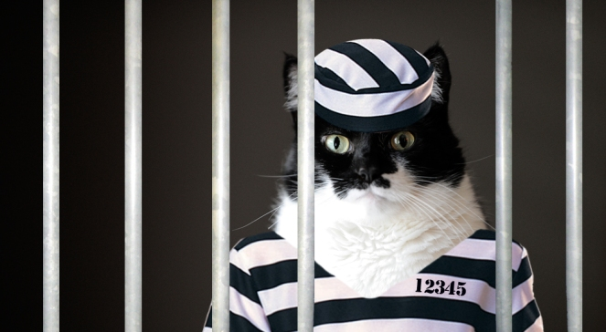 Cat-Caught-Smuggling